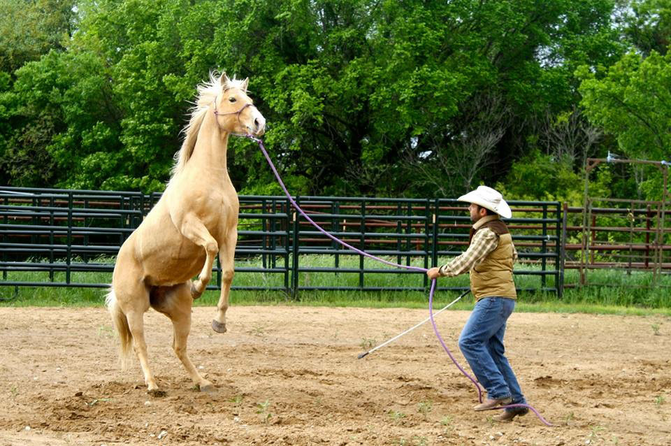 It is important to stay patient and redirect your horse's mind when they are fresh and worked up.
