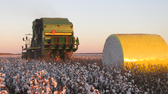 Over the last 55 years the cotton industry has boomed and in doing so has created many jobs in rural areas in Australia. (Photo by Samantha Hall)
