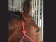Horse hair can be sent to Simply Equine at 8155 Hwy 110 Tyler, TX 75704. (Photo courtesy of Krista Lucas)