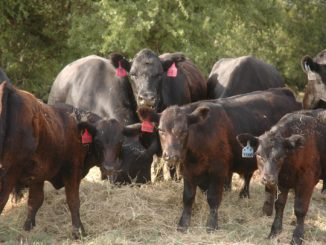 Duane Lenz, market analyst with CattleFax, will give an overview of the current cattle market and trends heading into the fall production cycle at the 62nd Beef Cattle Short Course at Texas A&M University in College Station Aug. 1-3. (Texas A&M AgriLife Extension Service photo by Blair Fannin)