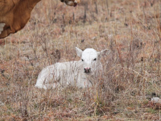 As a producer, about the only cost you can control is the cost associated with producing calves. (Photo by Jessica Crabtree)