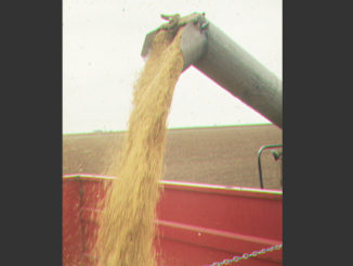 The soybean harvest is underway and A&M AgriLife experts say 2016 will be a hit-or-miss year for producers due to delayed planting from spring rains; arid mid-summer conditions and delayed harvests following late-August rains. (Texas A&M AgriLife photo)
